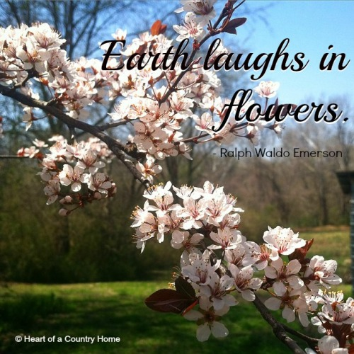flower earth laughs