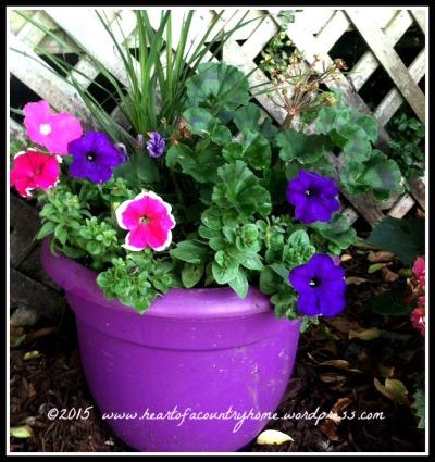 purplepot2015